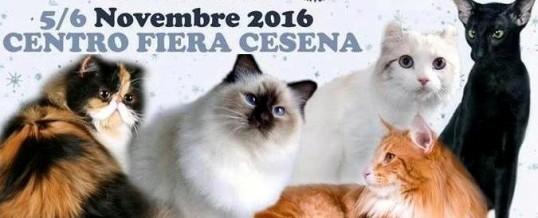 Esposizione di Cesena, novembre 2016